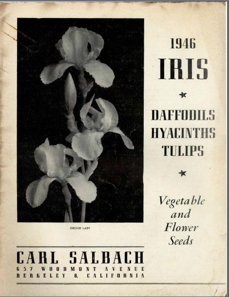German Iris