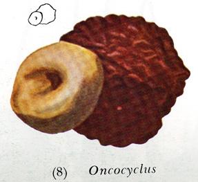 onco seed