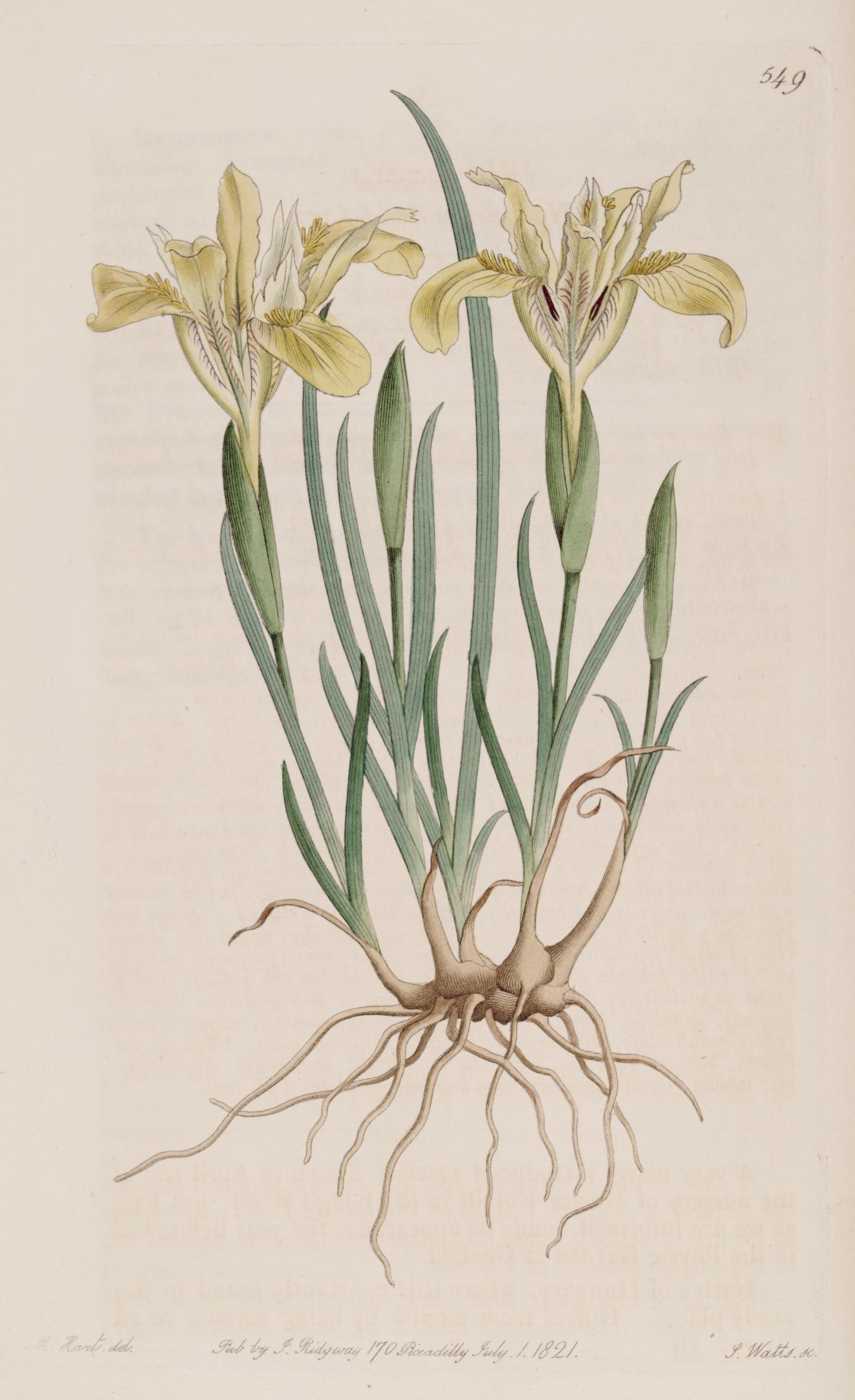 Physic garden wikipedia - Courtesy Of The Biodiversity Heritage Library