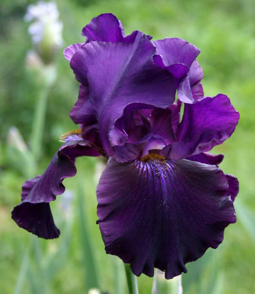 Tbblackmercury tbathrue iris wiki tb black mercury izmirmasajfo