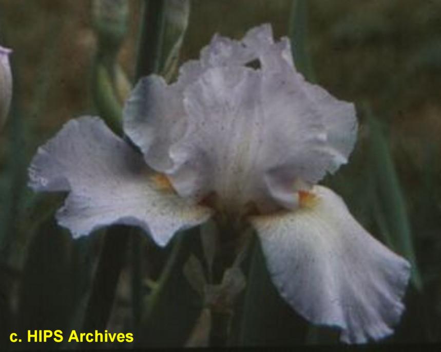 TbLovelyRipples < TbKthruO < Iris Wiki