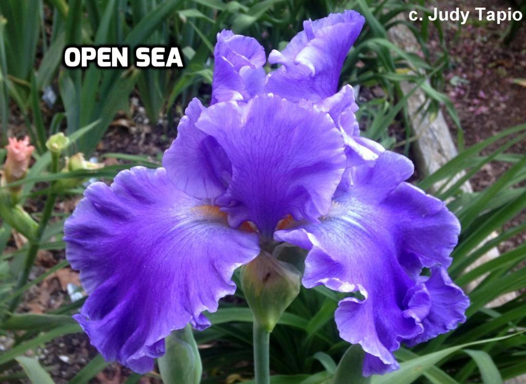TbOpenSea < TbKthruO < Iris Wiki
