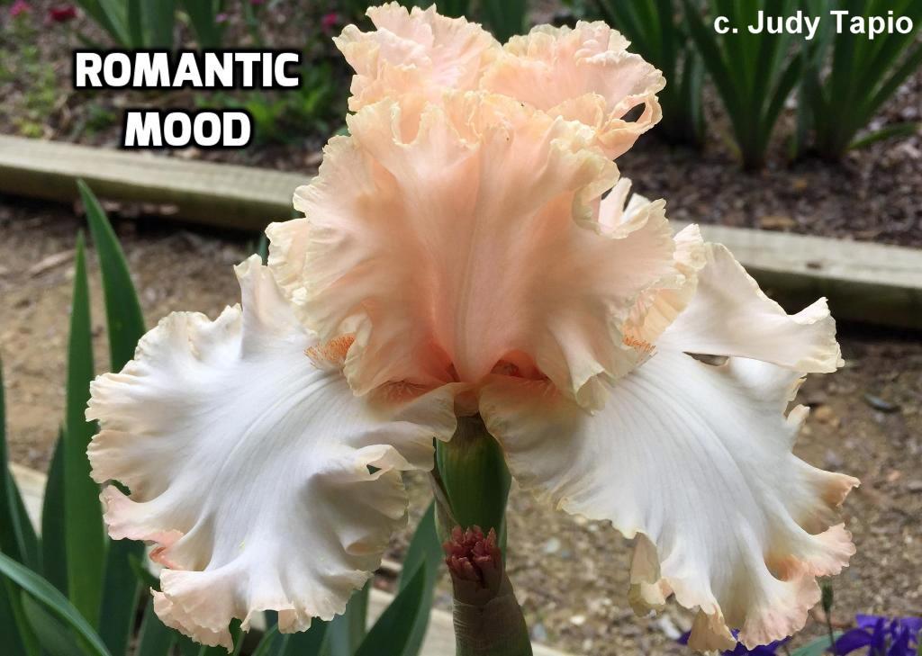 Tbromanticmood