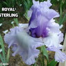 royalsterling06.jpg