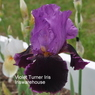 Violet Turner Iris Iriswarehouse.JPG